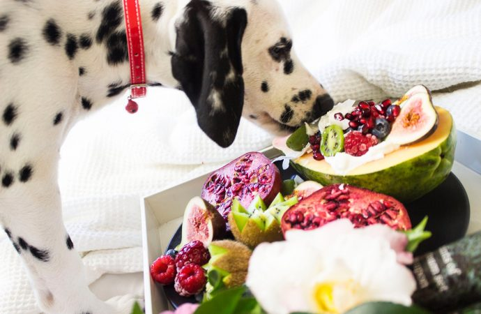 Nutritious Pet Food Guide for Your Four Legged Friends on a Budget