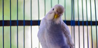 Guide To Best Parrot Travel Cages And Bird Carrier's